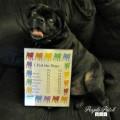 Roscoe-Dog-List