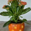 pumpkin-vase-1